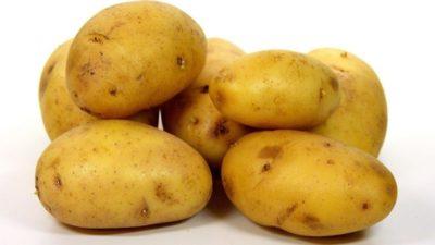 картофель банба описание сорта