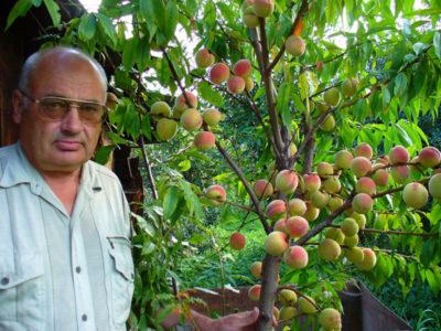 куда посадить яблоню