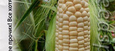 влажность кукурузы при хранении