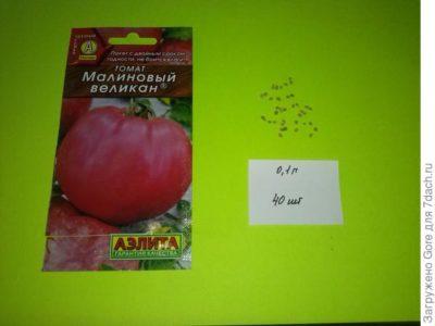 сорт томата малиновый гигант