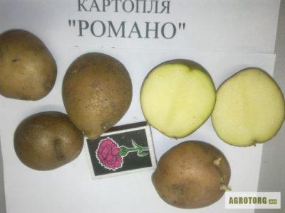 пикассо сорт картофеля