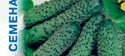 семена огурцов для теплицы самоопыляемые