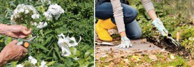 осенняя обработка плодовых деревьев и кустарников от вредителей