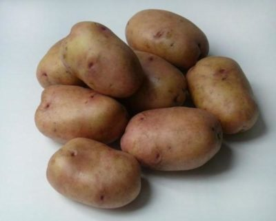 американка сорт картофеля