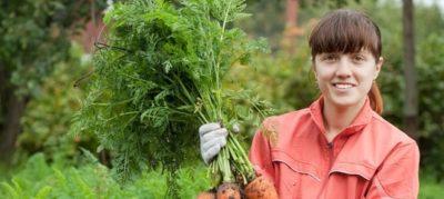 прополка моркови керосином
