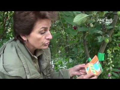 средства от тли на плодовых деревьях