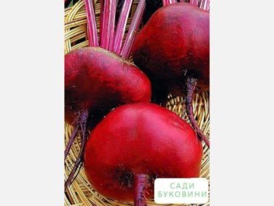 семена свеклы для сибири