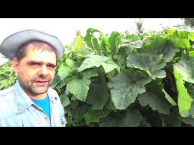 как избавиться в огороде от хмеля