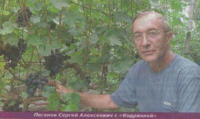 как правильно посадить виноград в сибири