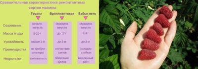 удобрения для малины ремонтантной