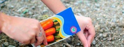 посев моркови в апреле