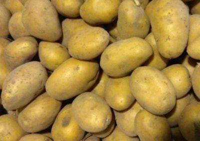 суперранние сорта картофеля