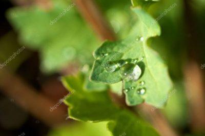 на листьях огурцов светло зеленые пятна