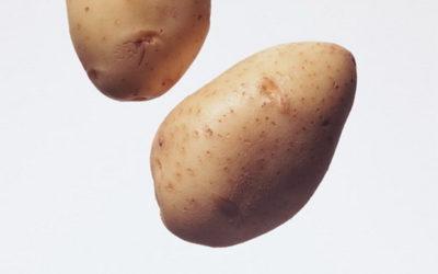 ирбитский сорт картофеля