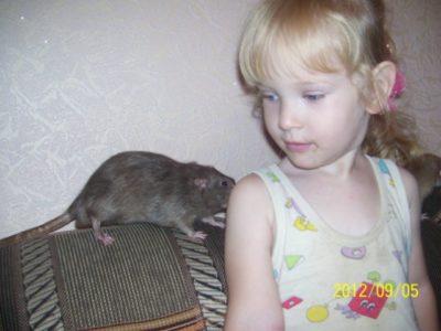 водяная крыса на огороде как бороться