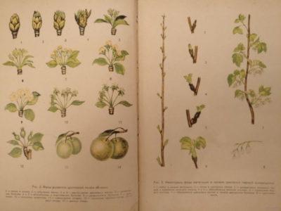 сроки обработки плодовых деревьев от вредителей