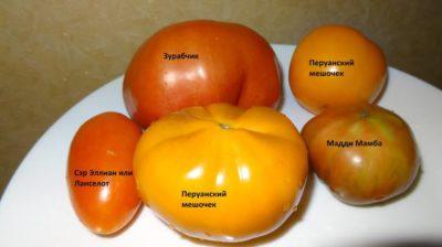 томаты которые долго хранятся