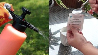 табачная пыль применение в садоводстве от вредителей