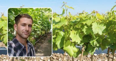 первый полив винограда
