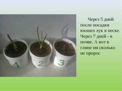 что посадить после огурцов