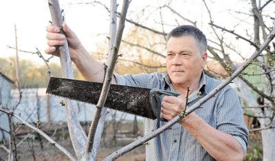 как обрезать старую яблоню