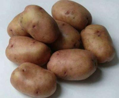 родриго сорт картофеля