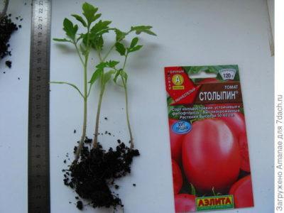 суперфосфат для рассады томатов