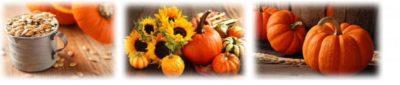 посадка тыквы в открытый грунт семенами