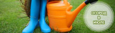 полив моркови перед уборкой