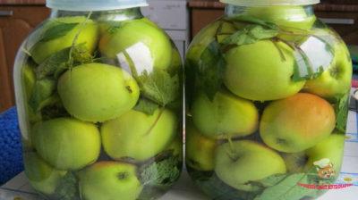 яблоки моченые в банках на зиму