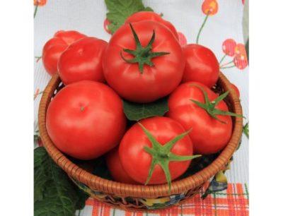 мясистые сорта томатов