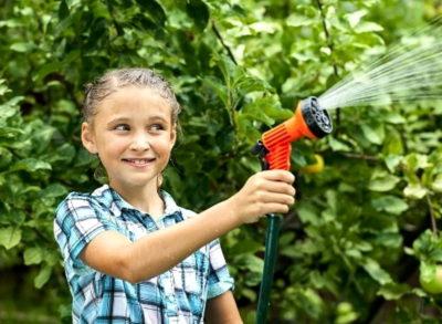полив плодовых деревьев летом