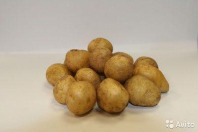сорта картофеля для пермского края