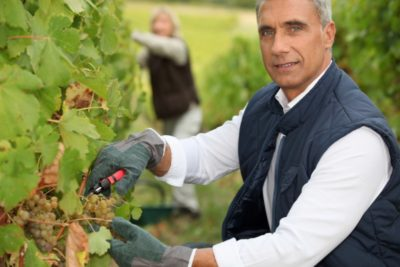 средства от болезней винограда