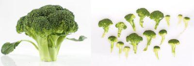 капуста брокколи выращивание из семян