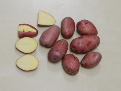 сорт картофеля для песчаной почвы