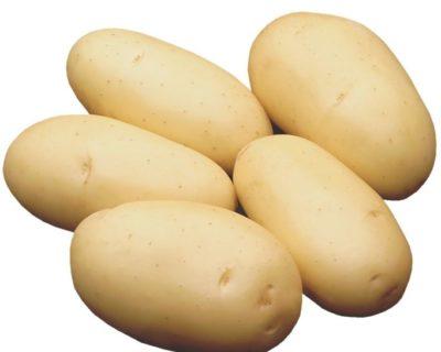елизавета сорт картофеля