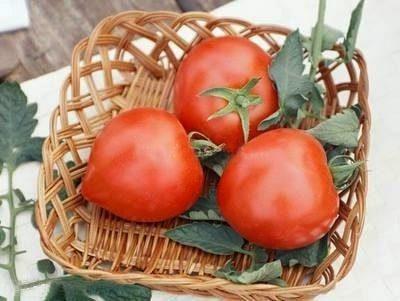 сорт томата примадонна