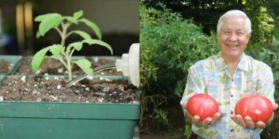 чем полить рассаду