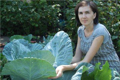 полив капусты в сентябре