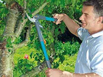 сроки полива плодовых деревьев