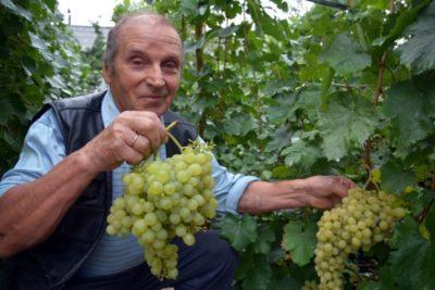 виноград в августе что делать