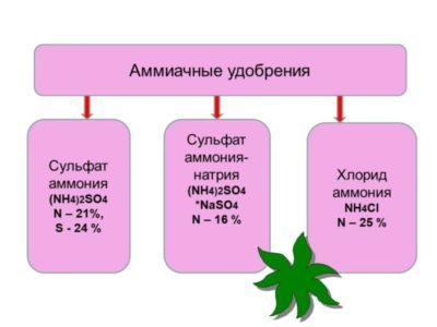 азотные удобрения их значение и применение