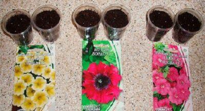 как поливать семена