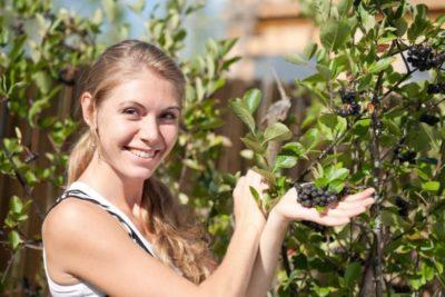 как посадить черноплодную рябину