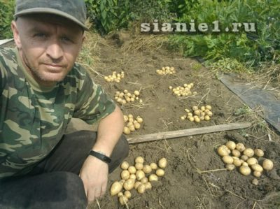 удобрения для картофеля осенью после уборки