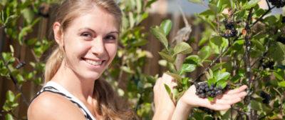 как посадить черноплодную рябину весной