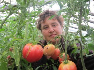 как избавиться от фитофторы в теплице на помидорах