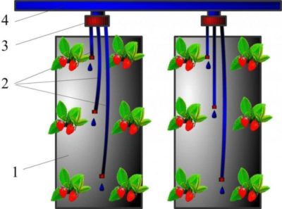 как посадить клубнику на спанбонд