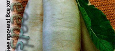 семена моркови на туалетной бумаге